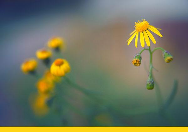 naturheilpraxis-goldes-krauetertherapie-innen